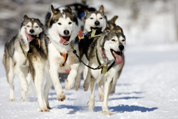 dog sledding destinations
